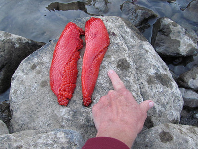 The roe from Jeff's salmon!