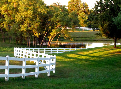 White 3 Rail Fence