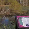 Interpretive wayside & Beaver lodge