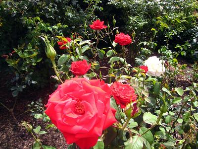 Portland, Oregon, The Rose City