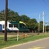 Denton County Transportation Authority (DCTA) Stadler GTW 2/6 DMU
