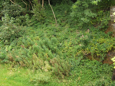 Looking East from the location of the signal box at Paisley West, showing the remains of the up platform of Paisley West Station
