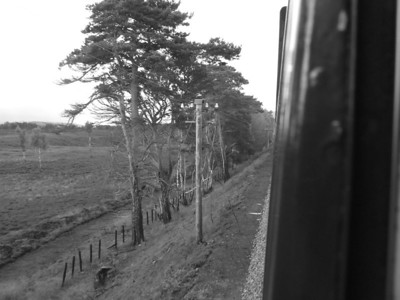 Telegraph poles next to the railway