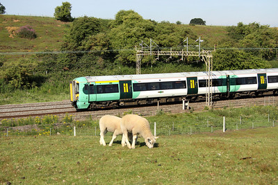 2 July. Totally oblivious to 377204 passing Old Linslade on the 0913 Milton Keynes - South Croydon, Shaun and friend munch away!