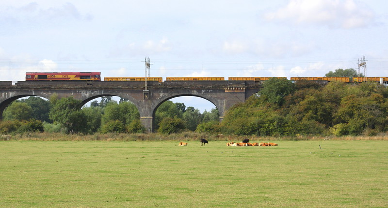29 August 2015. The cows appear unnerved by the site of 66138 passing over Haversham Viaduct which was heading the 6R01 0610 Bescot - Cheddington engineers.