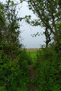 A view across the original alignment towards the sea at Shankill. Thursday, 05/07/12