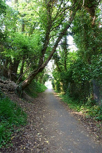 Looking back down the former line towards Howth Station.