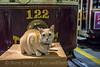 Photo 5276<br /> Stone J. Feline<br /> McKinney Avenue Transit Authority<br /> Dallas, Texas<br /> October 9, 2018