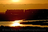 Photo 0164<br /> Altamont Commuter Express; Alviso, California<br /> March 8, 2007