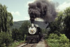 Photo 1995<br /> Allegheny Central (CPR) 1238; Linden, Virginia<br /> June 1981