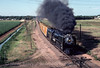 Photo 2969<br /> Union Pacific 8444; Greeley, Colorado<br /> July 1982