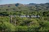 Photo 3871<br /> Copper Basin; Hayden Junction, Arizona<br /> July 13, 2016