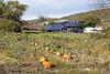 Photo 1256<br /> Reading, Blue Mountain & Northern 425; Haucks, Pennsylvania<br /> October 18, 2008