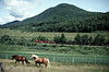 Photo 0807<br /> Clarendon & Pittsford (Vermont Rail System); West Rutland, Vermont
