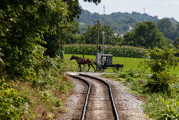 An Amish buggy heads across the grade crossing behind the train.