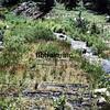 DRG1976071525 - Rio Grande, The Moffat Road, CO, 7/1976