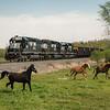 Three horses begin to run as an empty PPLX coal train passes by near Schuyler, Pennsylvania.