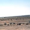 SRO1984050003 - Saudi Railways Organization, Al-Kharj, Saudi Arabia, 5-1984
