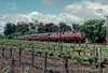 Photo 2124<br /> Napa Valley Wine Train; Oakville, California<br /> May 1991