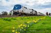 Photo 3709<br /> Amtrak; Junction City, Oregon<br /> March 18, 2016
