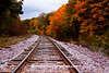 Fall Color Along the Railroad Tracks, Sauk County, Wisconsin