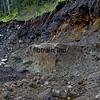 WPY2015092277 - White Pass & Yukon, Skagway, AK - Fraser, BC, 9/2015