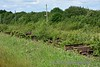 Mallow Beet Factory Sidings still contain a large number of liner flats, slowly being reclaimed by nature.  Sat 18.06.16