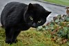 A friendly cat at Woodenbridge Golf Club. Mon 02.04.18
