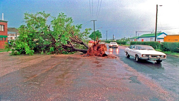 Storm last night decked this tree in the main street of Emerald Qld.