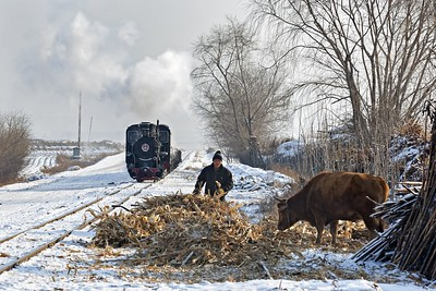 C2 #041 passes a local cattle farmer at Daijingang
