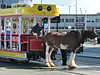 Douglas Horse Tramway - September 16, 2016