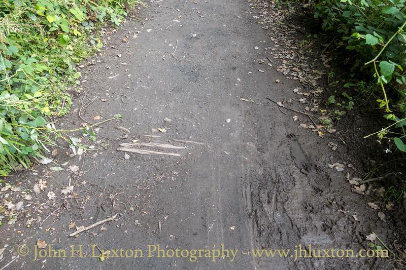 Tintern to Tidenham Tunnel - Wye Valley Greenway - July 12, 2021