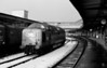 55 016 At York – having worked 1V 89 – 09.40 Edinburgh – Plymouth to York in the snow 29/11/80
