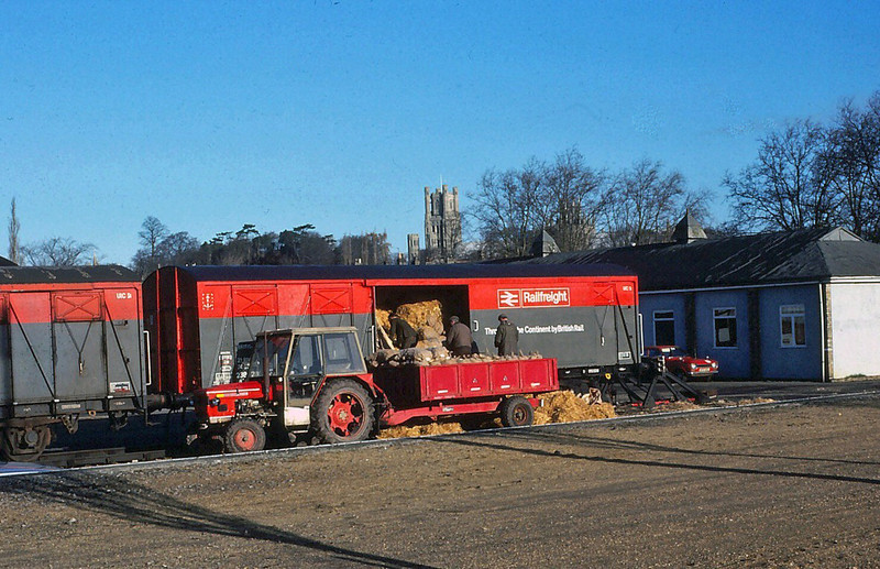 "Railfreight wagons (Ferryvans?) being loaded with what looks like potatoes at The Potter Group sidings at Ely in 1981. ""The Ship of the Fens"" Ely Cathedral is prominent on the skyline."