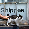 Arthur the station cat. Everybody's called Arthur round here, even the cat.