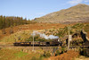 Taliesin heads the 9.00 Porthmadog - Ddaullt vintage train at tank-curve  15/10/11 (Photographer cloned out of this shot)