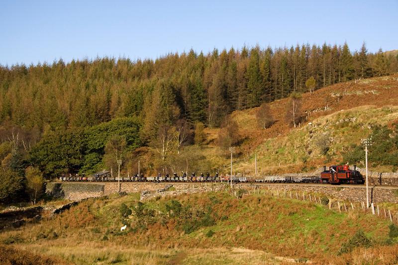 A very clean sheep watches David Lloyd George bring up the 09.15 Porthmadog- Ddaullt slate train through tank-curve - 15/10/11