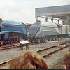 3 A4s at the Museum - Sir Nigel Gresley, Silver Link (Bittern in disguise) and Mallard