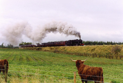 After the series of runs which took 48151 to Wick and the Kyle, it now heads south from Inverness to Polmont, 1Z25 was due off Inverness at 0930 but for what ever reason was late getting away. As it climbs the 1 in 70 grade to Culloden, a highland cow turns to look at the snorting beast approaching.  17/10/1998