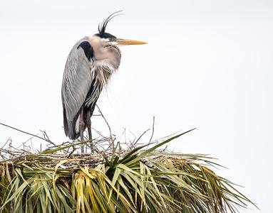 Bad hair day at Viera Wetlands