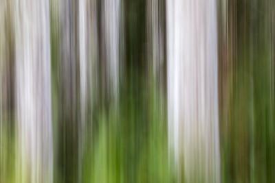 Corkscrew Swamp Reserve tree blur...