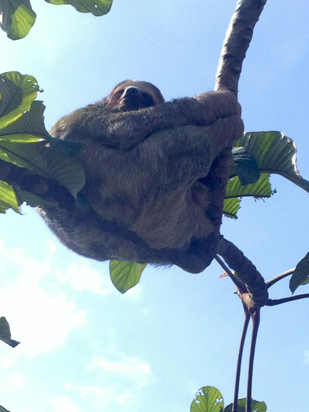 sloth taken by someone else