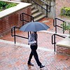 BEN GARVER — THE BERKSHIRE EAGLE<br /> A man walks past Berkshire Bank on McKay Street. With rain forecast for the entire day, there is no escaping the rain in Pittsfield.