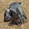 2007-03-25 029, crop