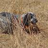 2007-03-25 028, crop