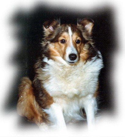 "Coburn's Mikara, CD  -  ""Kara""<br /> Our 1st - the one for whom the kennel was named"