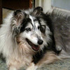 Sybil (karashome Sybil in Starlite) in Memorium, 02/08/94-11/03/09