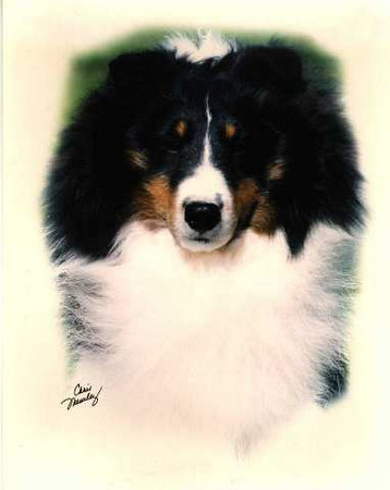 "AKC/INT CH, UKC GRCH Karashome Enchanted Evening - ""EVE""<br /> HRH, The Princess Eve"