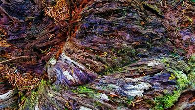 Rainbow Wood #3: Spruce Burl Forest