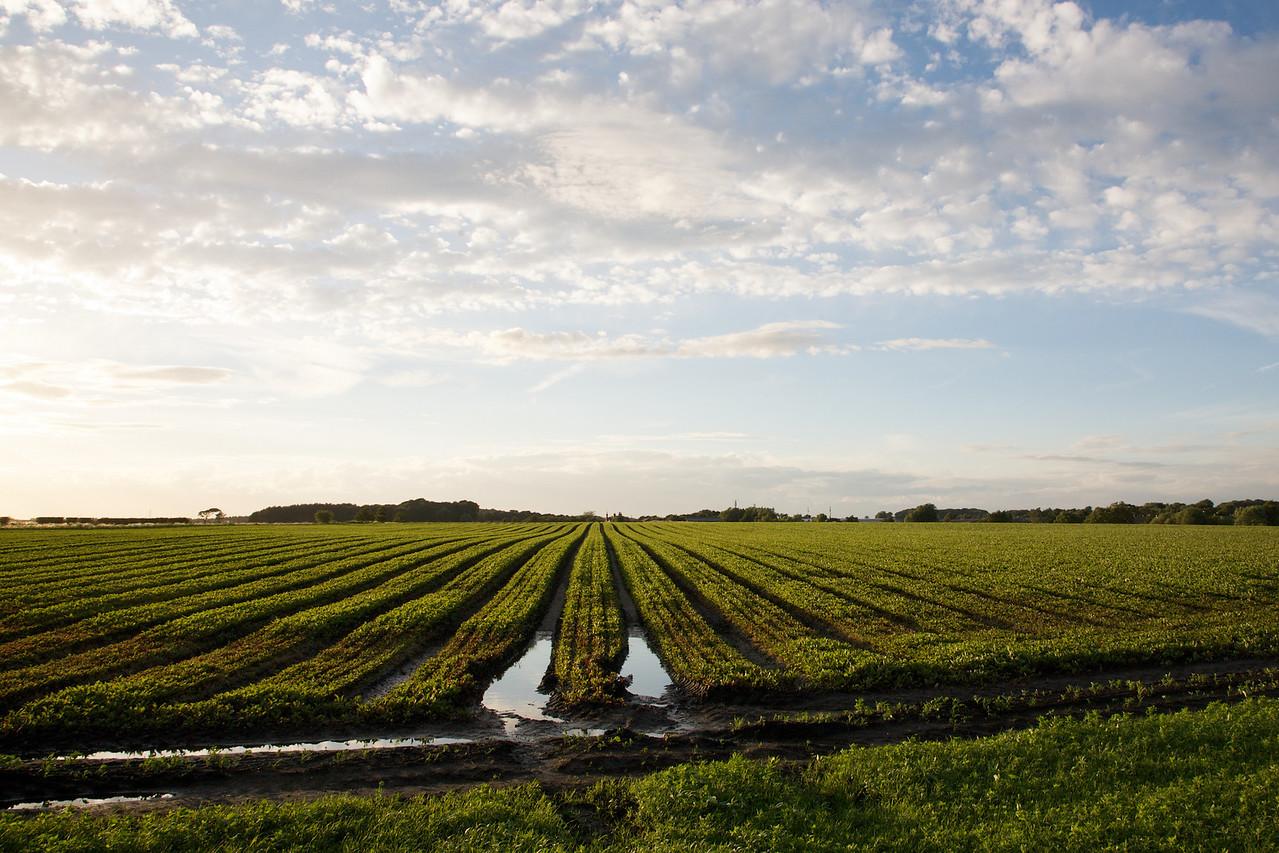 Rainford Agriculture